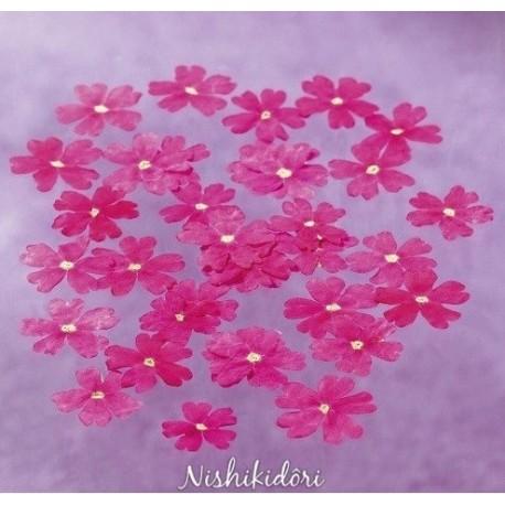 Werbena jadalna różowa suszona a 50szt